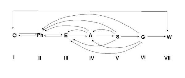 Схема эволюции всех членов